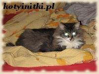 Ksenia – kotka syberyjska