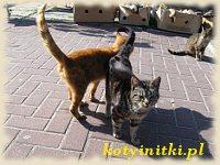 Koty z Jastarni...