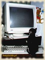 Kota przed monitorem