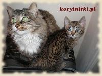 Kotki dwie