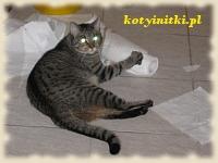 kot bawi się papierem