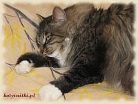 śpiące koty