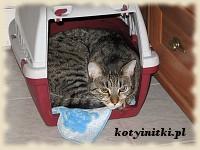 Kot w transporterku...