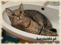 kot w umywalce