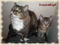 koty na walizce