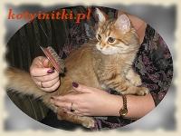 Zorza – kotka syberyjska