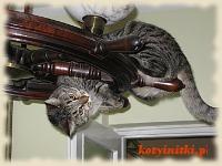 kot na żyrandolu