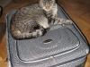 Mika na walizce