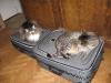 Mika i Ksenia na walizkach