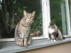 Koty na spacerze
