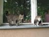 Koty na parapecie
