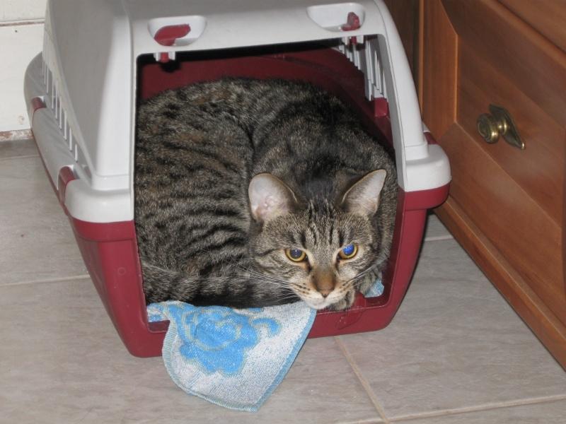 Mika w koszyku