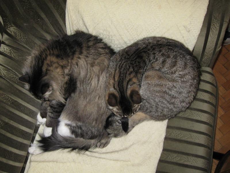 Zmeczone koty