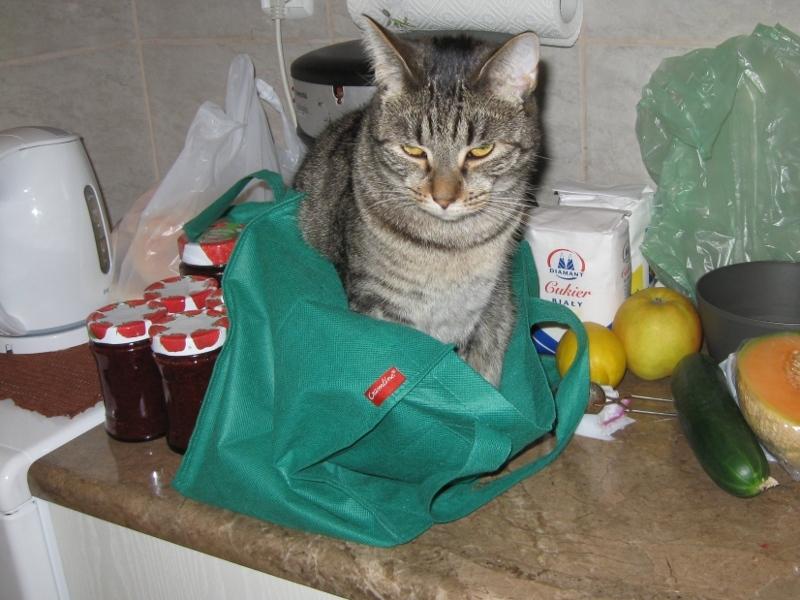 Mika w torbie1