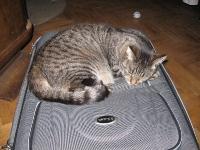 Drzemka na walizce